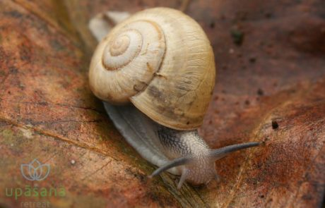 Biodiversity Upasana