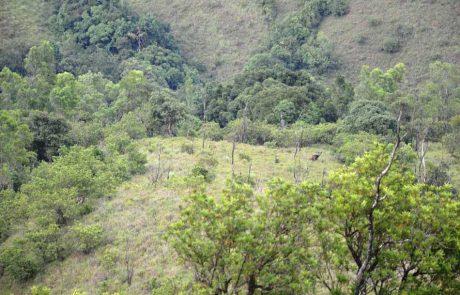 Kudremukha Safari